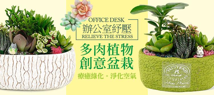 首頁大Banner-辦公室紓壓多肉植物創意盆栽