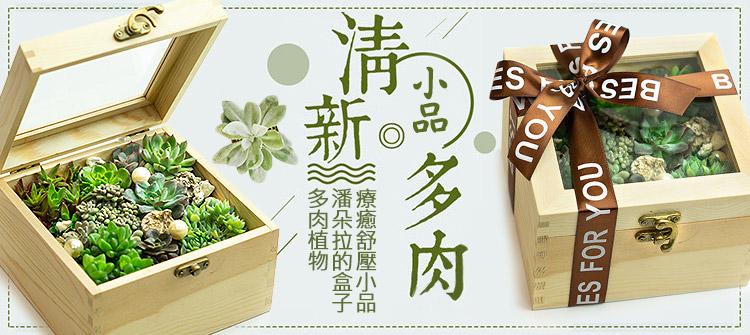 首頁大Banner-潘朵拉的盒子多肉植物