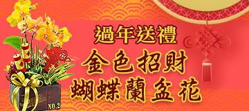 首頁右上小Banner-金色招財蝴蝶蘭盆花