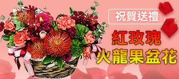 首頁右上小Banner-紅玫瑰火龍果盆花