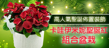 首頁右上小Banner-卡哇伊米妮聖誕紅盆栽組合