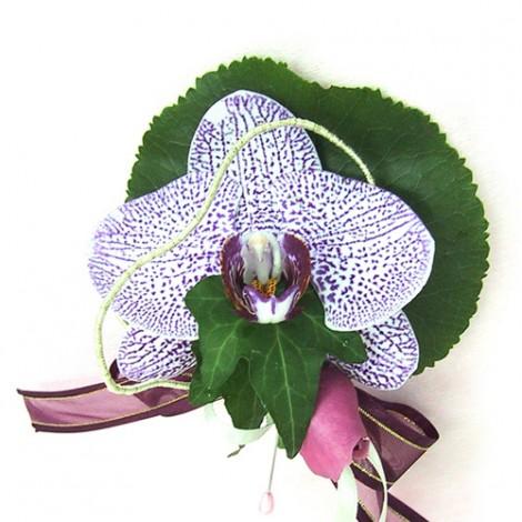 胸花-單朵蝴蝶蘭 胸花 緞帶 鮮花 記者會