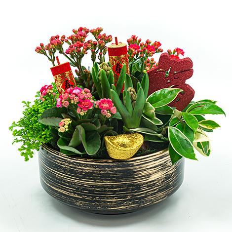 超人氣開運植物 財運大發組合盆景 花店推薦 春節佈置 招財植物