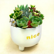 辦公室創意盆栽 多肉植物