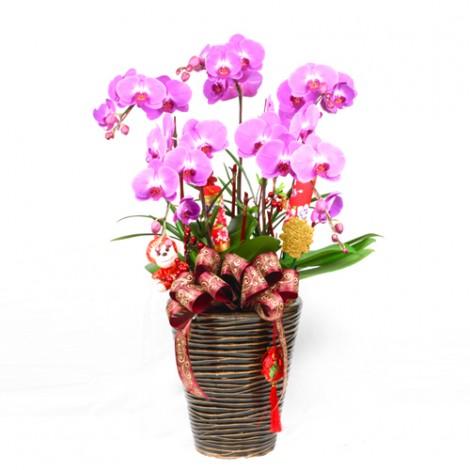過年花禮藝品推薦 吉祥如意蝴蝶蘭盆栽 過年居家擺飾  猴年送禮  賀歲禮  新春拌手禮