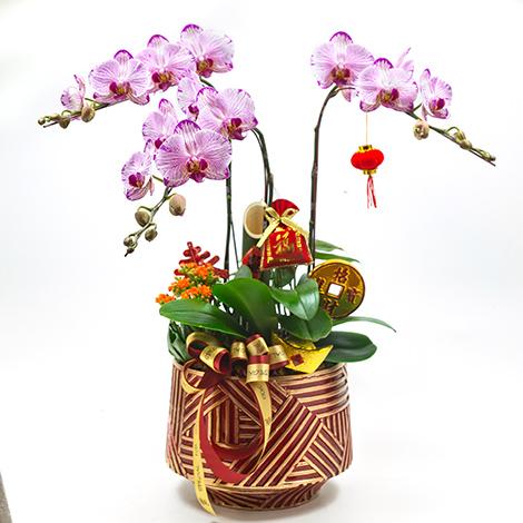 送禮首選 蝴蝶蘭盆景 花店推薦 過年居家擺飾  猴年送禮  賀歲禮  新春拌手禮