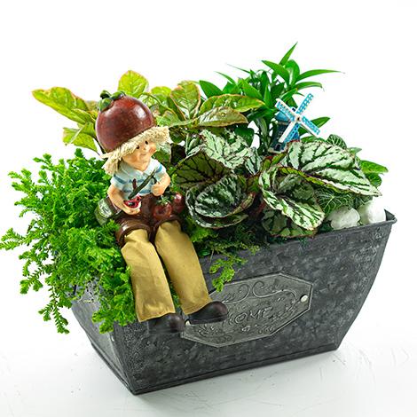 花店推薦 甜蜜花園組合盆栽 療愈新品