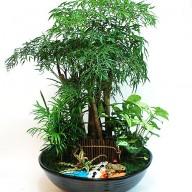 首富喜歡 富貴樹組合盆栽 富貴逼人
