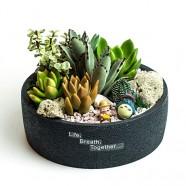 推薦辦公室 創意盆栽 多肉植物