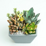 花店推薦 辦公室舒壓多肉植物創意盆栽