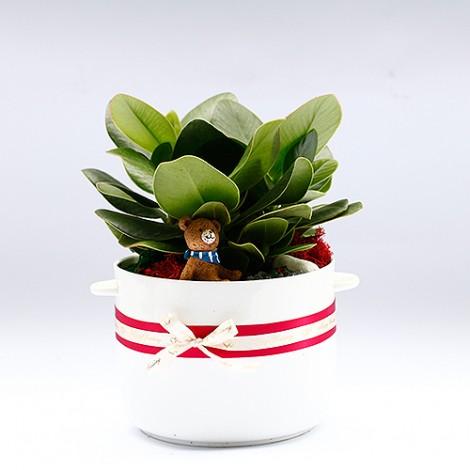 招財方法 聚財樹 室內植物盆栽 室內植物盆栽 招財方法