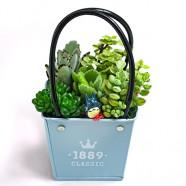 多肉植物哪裡買 多肉植物盆栽 台北花店就有