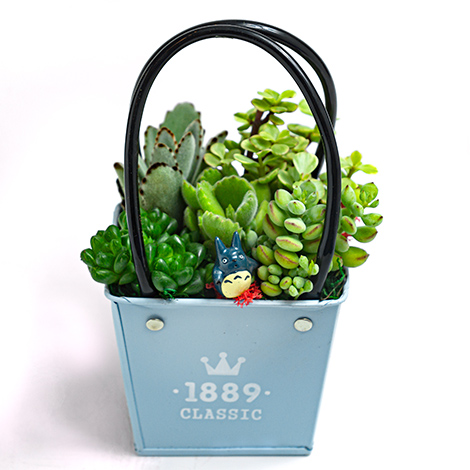 多肉植物哪裡買 多肉植物盆栽 台北花店就有 花店 多肉植物 多肉植物哪裡買 多肉植物盆栽