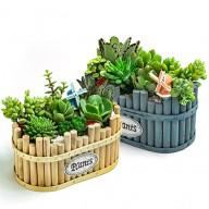 花店獨家 多肉植物盆栽 辦公室植物
