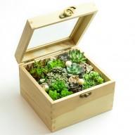 療癒舒壓小品 潘朵拉的盒子多肉植物 送禮首選
