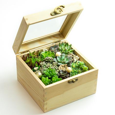 療癒舒壓小品 潘朵拉的盒子多肉植物 送禮首選 小品盆栽 辦公室盆栽 居家佈置 多肉植物盆栽