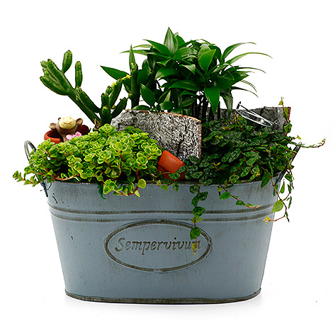 淨化空氣植物 美式鄉村風組合盆栽 舒壓推薦 小品盆栽 組合盆栽 淨化空氣室內植物 綠化辦公室盆栽