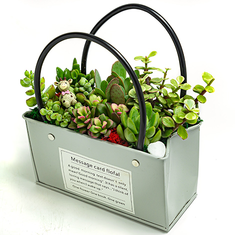 獨家療癒園藝 多肉盆栽 全省配送 園藝盆栽 全省送花 花店外送 多肉植物哪裡買