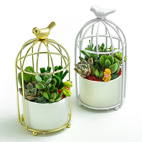 推薦辦公室 忘憂鳥創意盆栽 多肉植物 多肉植物 生日禮物送什麼好 榮陞 創意盆栽