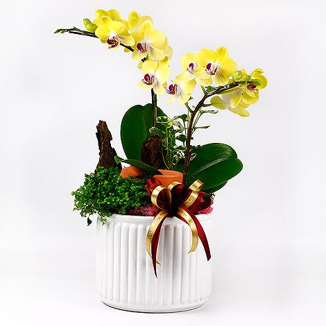 禮物送什麼好 蘭花盆栽 花店訂花全省配送 蘭花盆栽 蘭花 花店訂花
