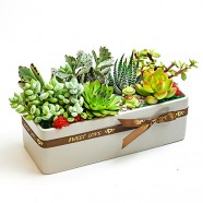 多肉植物,組合盆栽,花店訂花,多肉植物盆栽