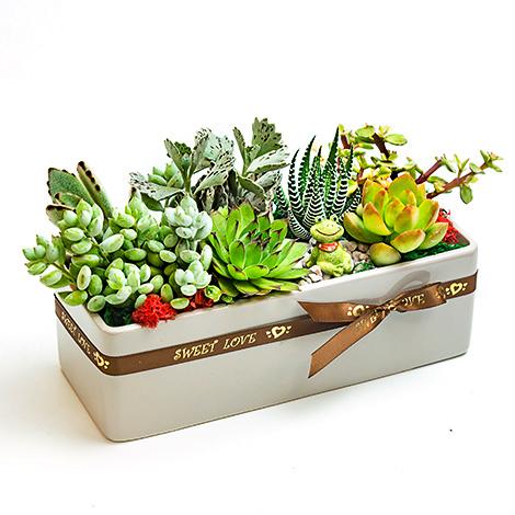 多肉植物,組合盆栽,花店訂花,多肉植物盆栽 花店訂花 多肉植物 多肉植物盆栽 組合盆栽