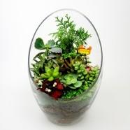 花店送花服務 室內盆栽 可愛萌翻多肉植物