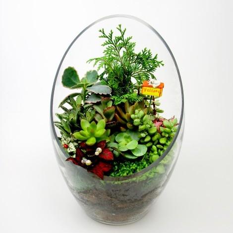 花店送花服務 室內盆栽 可愛萌翻多肉植物 多肉植物哪裡買 室內植物盆栽 多肉植物 送花服務 花店送花