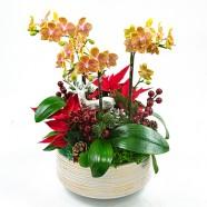 愛在聖誕節 可愛蘭花組合盆栽 聖誕節佈置