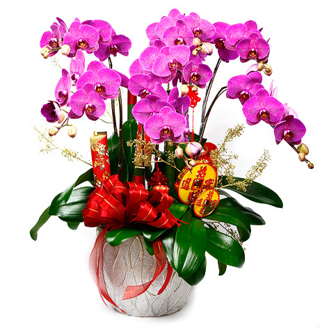 花店送花 蝴蝶蘭花首選 過年送禮 過年送禮 蝴蝶蘭 蝴蝶蘭花 花店送花