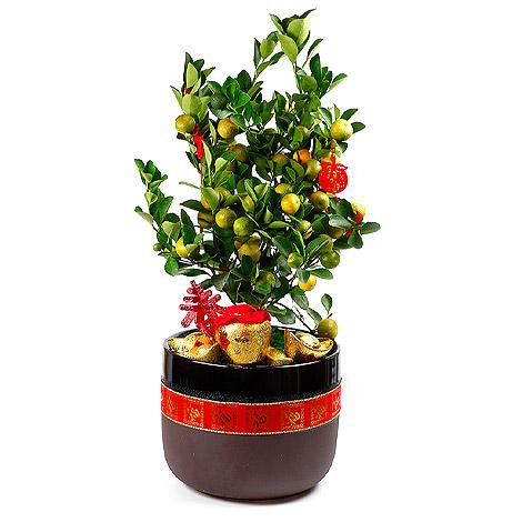 花店外送 過年送禮 金桔好歡喜盆栽 過年祝賀詞 過年盆栽 過年送什麼 花店 花店外送