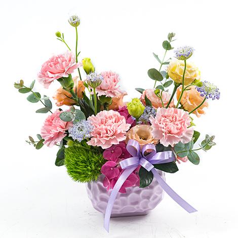 粉溫馨康乃馨盆花 母親節限定花禮