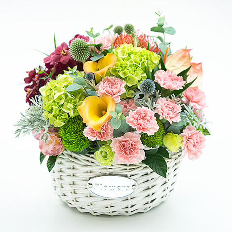 母親節送什麼好 清新康乃馨盆花