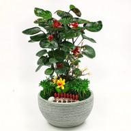 辦公室觀葉植物推薦 竹芋盆栽