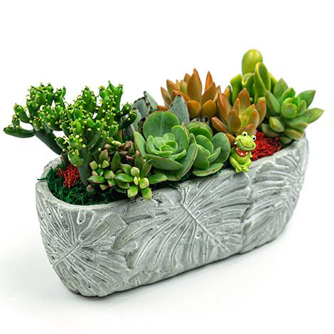 NICE禮物 多肉盆栽 花店推薦 多肉植物