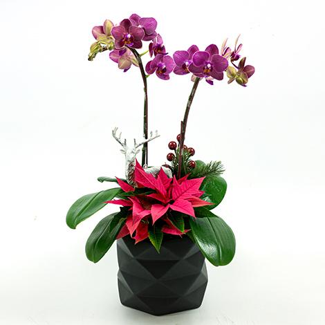 耶誕節限定 奇幻嘉年華聖誕蘭花盆栽 花店推薦 歡樂耶誕 蘭花 聖誕佈置