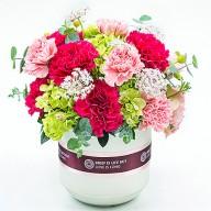 高CP值康乃馨盆花 花店母親節代客送花